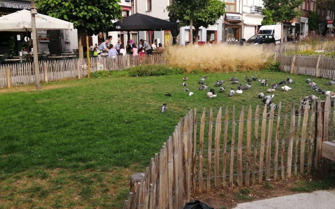 Storia 2: Lourdes Tutella – Belgio